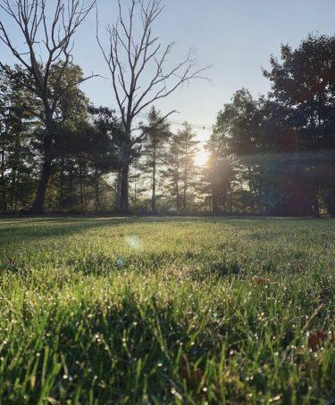 Newcombe morning yard
